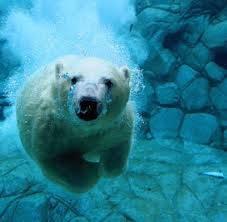 Beruang ini kata kalian lucu gaaa =))