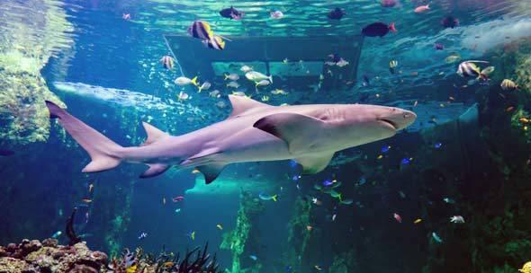 SEA LIFE Sydney Aquarium.. mau donk ...