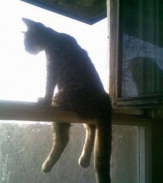 kucingnya GALAU.. gue hrus blg WoWW... :D