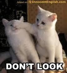 wah,,yang menganggap kucing i ni lucu klik wow