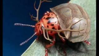ini adalah serangga yang mempunyai tanduk rusa dan cangkang kura-kura