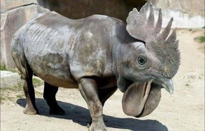 apakah hewan ini badak ataukah ayam??????