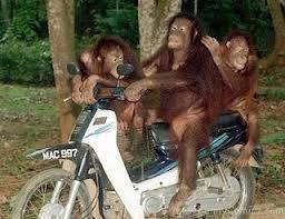 apa yg kaLian Lakukan jikA paRa monyet ini Lewat di depan rumach kaLian,.. jgn Lupa kLick WOW nya ea,..