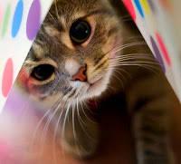 Kenapa Kucing Menoleh Jika Dipanggil 'Pus'