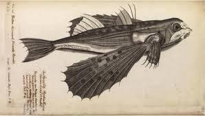 ikan ini adalah ikan jaman purba ikan ini hidup di kedalaman 5893 kaki ikan ini hidup di perairan antaricca ikan ini bernama show wing black fish jika kamu mau lebih banyak mengenal satwa langka ke profil ku aja jgn lupa loe harus bilang WOW