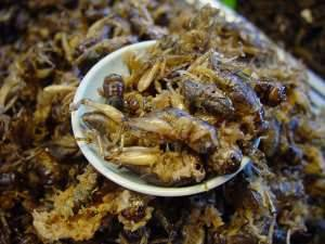 Kalau yang satu ini masih sering dijumpai di negara kita, selain jangkrik juga belalang dan menurut yang sudah pernah mencoba rasanya gurih. Namun bagi kita tetap saja aneh dan jijik memakannya.
