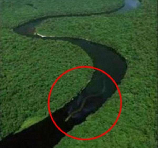 Seekor ular TITANOBOA (ular terpanjang yg pernah ada) Tertangkap kamera dari helikopter