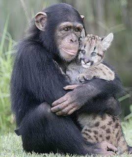 Budayakan Meng-Klik WOW sebelum membaca .. nah hewan aja saling menyayangi kita sebagai makhluk yang lebih sempurna juga harus saling menyayangi .. Klik WOW oke.. Thanks ---