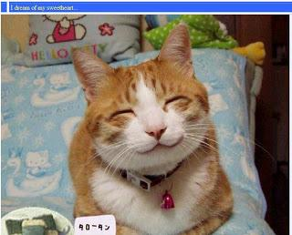 bagi yg suka senyuman kucing ini, jangan lupa WOWnya ya :)