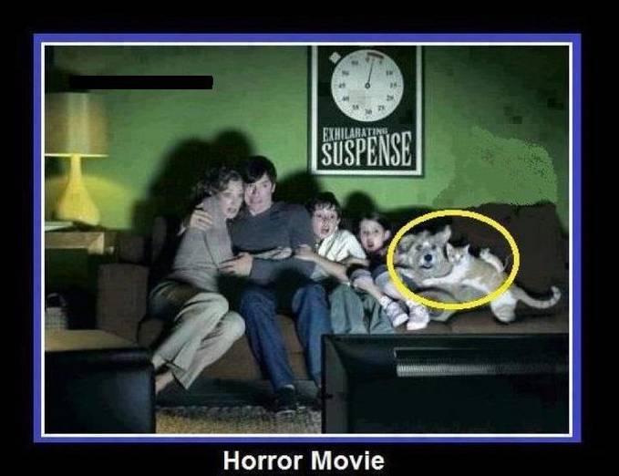 budayakan menklik-WOW sebelum memaca | nah bagaimana jika anjing anda seperti ini ?dia juga ketakutan menonton film horror haha.. sungguh UNIK ya ^_^