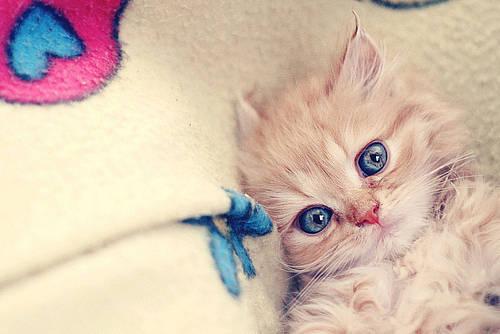 Wowliat Kucing Imut Ini