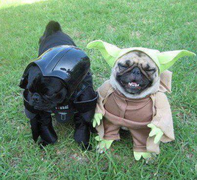 Guest! Karaketer apa yang lagi dipake sama funny dogs ini??? WOWnya jgn lupa ya