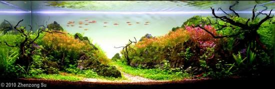 4rd Place Aqua Scaping Contest