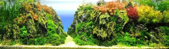 3rd Place Aqua Scaping Contest