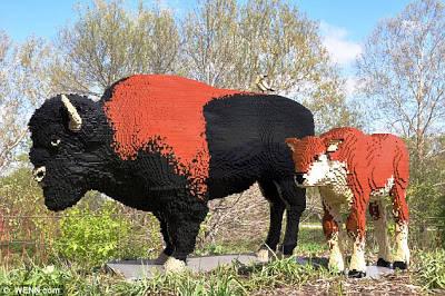 banteng terdiri dari 45.143 potongan LEGO dan betis dibangun dari 16.229 dan dipamerkan di Reiman Gardens di Iowa State University Sumber