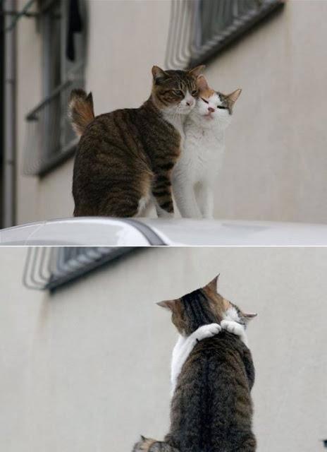 WOW dong, buat kedua kucing ni... so sweet, beri tanggapan..