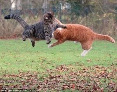 Lucu . . . Apa yang kalian lakukan, jika kucing ini punya kalian , , , hehehehe , , ,