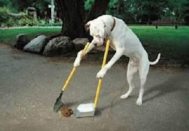 nih anjing pinter banget abis boker langsung di sapu hehehehehe wow