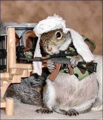 Pasukan militan tupai dengan AK47 siap memberondong musuh,, WOW