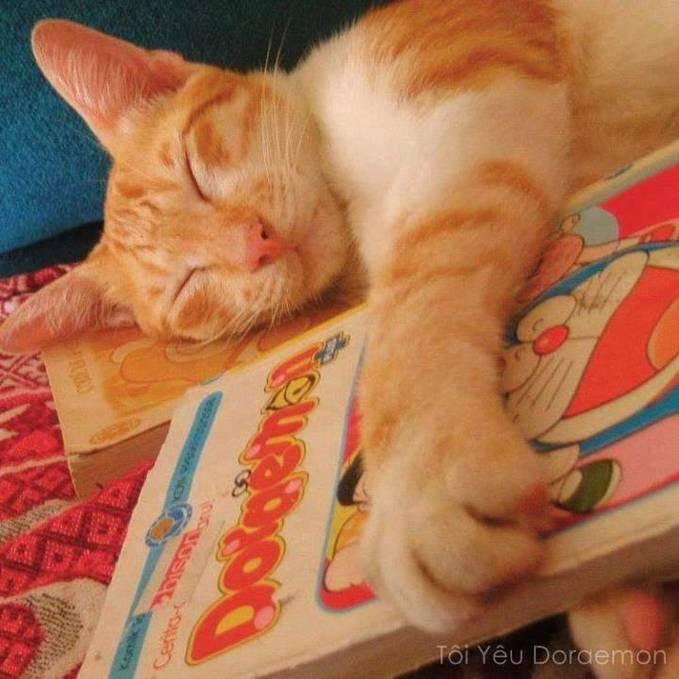 inilah kucing yang ternyata penggemar sesamanya (maupun robot) klik tombol wownya yaa... ada yang bisa tebak ini komik Doraemon dari mana?