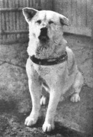 Hachiko adalah seekor anjing yang sangat setia kepada majikannya,setelah majikanya meninggal , hachiko terus menunggu majikannya yang tidak kunjung pulang di stasiun shibuya, Tokyo, hingga meninggal. yang merasa kasihan klik WOW YA.....