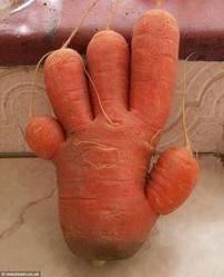 ajaib ya wortel nya berbentu tangan manusia.... ...yang setuju Kasih WOWnya dong....