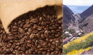 Island Dari St Helena Coffee Company - St Helena Pulau St Helena, 1.200 mil di lepas pantai Afrika adalah berkembang biak bagi St Helena Coffee. Itu berutang popularitasnya yang sekarang pada Napoleon Bonaparte yang memuji kopi menaburkan beni