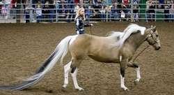 Ekor Kuda Terpanjang di Dunia