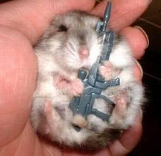 hamster-mau-teror-bank-jangan-lupa-WOW_NYA-ya