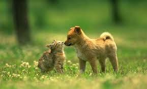 Ternyata Hewan Yang seharusnya bertengkar tetapi bisa bersahabat juga :) Jika Setuju WOWa