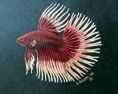 Ikan cupang termahal di Dunia