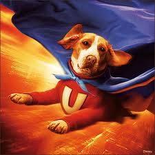 Mungkin anjing ini sudah mainstream mana WOW nya!