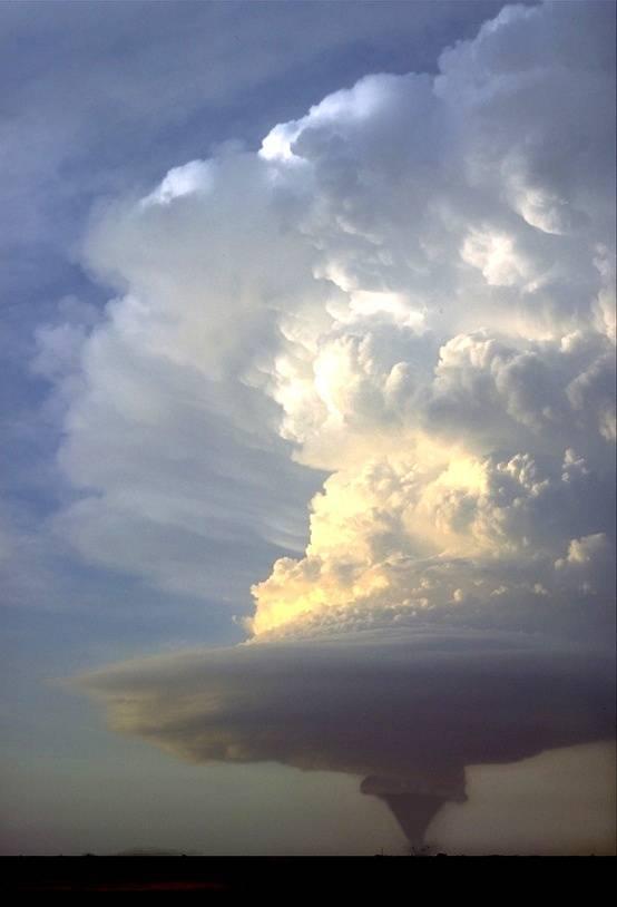 Tornado Yang WOW!