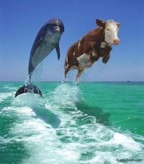 Nah loh sapi adu balap sama lumba-lumba. klik WOW. ya sobat dan apa komenmu?