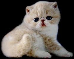 Kucing Lucu Kucing Lucu Pulsk