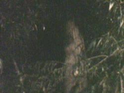 Warga Roxy Mas, JKT dihebohkan adanya kenampakan Pocong yg disaksikan salah satu warga Roxy. Kabar adanya penampakan pocong di Roxy berawal dari anak kecil yg yg sedang buang air kecil di bawah pohon yg diduga sebagai tempat POCONG tsb., WOW