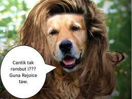 Hahaha manusia bisa mengiklankan prodik, binatang jga bisa iklankan produk, contohnya nih, anjing ini pnya rambt lebat krena pke rejoice :D hah ada aja y :D lucu dikit aja :D