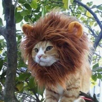 Cat or Lion?