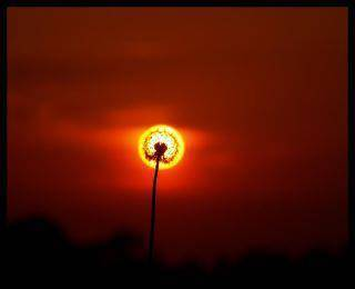 [PERFECT MOMENT] Ini baru Bunga Matahari betulan....