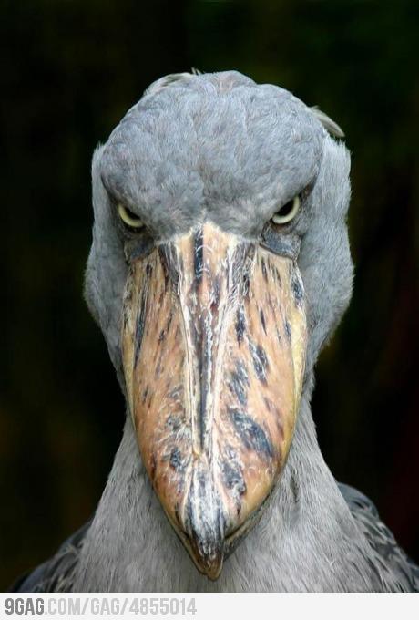 WOW... ini baru asli ANGRY BIRD