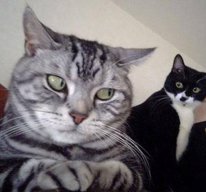 tom = ngapain ia dia liatin gw kaya gitu garry = kayanya tuh kucing abu2 meratiin gw dech tom = pa mungkin gw ganteng kali yah makanya dia liatin gw garry = pa mungkin tu kucing suka sama gw atau dia mau bilang cinta hayo pa cerita slanjutnya..