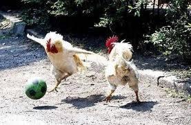 ayam aja bisa main sepak bola apa lagi kita coba peresiden suruh sepak bola kaki nya bisa kena paku hahahah klik wow