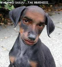 Hahahahhaa Emak dari anak ini mungkin salah beroperasi,,, atau mungkin kawin sma anjing... ehhhh g boleh gitu dosa!!! pokoknya kesian banget wajahnya udah kya anjing sma manusia item :D