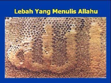 Lebah yang tanpa sengaja menampakan lafadz Allah yang Maha Kuasa