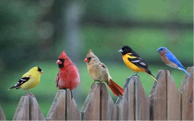 Real Angry Bird !!! @WOWnya sahabat PULSK...