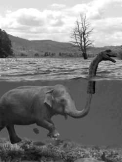 Nice work. Gajah memakai Kepala Loch Ness di belalainya.