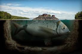 Ikan Terbesar Di Dunia..........Click WOW Nya...Dulu Donk!