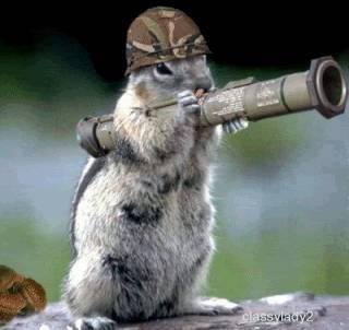 Marinir tentara tupai siap tempur.. hahaha Just kidding...