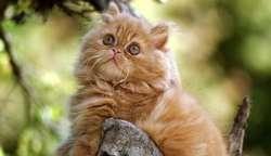 Kucing, Mamalia Predator yang Mematikan