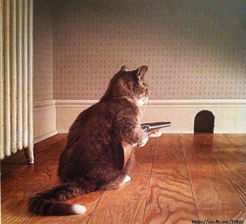 ini kucing sepertinya gemes banget untuk memburu tikus..sampe bawa senapan gini.. kalian dukung mana antara kucingnya atau tikusnya ?